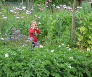 Drei Gemüsesorten in Gartenbeet anbauen