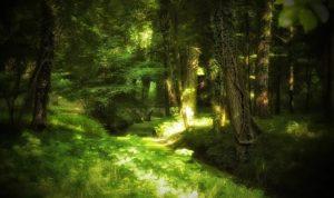 Der Wald als Erholungsort